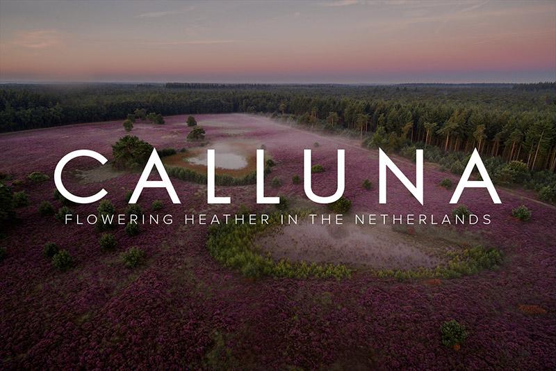 Calluna: een eerbetoon